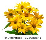 bouquet of yellow daisies... | Shutterstock . vector #326080841