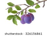 Three Plums On The Branch...