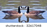 Two Canadian Geese Forming An...