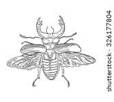 beetle | Shutterstock .eps vector #326177804