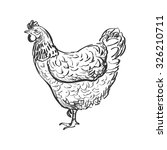 doodle hen  sketch illustration.... | Shutterstock .eps vector #326210711
