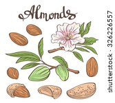 almonds with kernels  leaves... | Shutterstock .eps vector #326226557