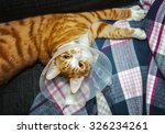Image Of Cat Wearing Neck Cone.