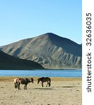 herd of horses in front of lake ... | Shutterstock . vector #32636035