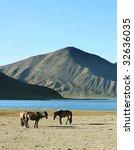 herd of horses in front of lake ... | Shutterstock . vector #32636035
