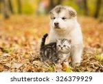 Scottish Cat And Alaskan...