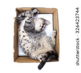 Stock photo scottish shorthair cat playing in paper box 326423744