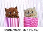 Stock photo two british long hair kittens 326442557