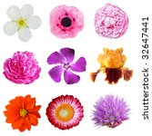 Set Of Summer Flowers Isolated...