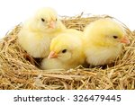 Three Little Newborn Yellow...