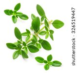 Thyme Fresh Herb Isolated On...