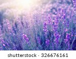 Small photo of Lavender bushes closeup on sunset. Sunset gleam over purple flowers of lavender. Bushes on the center of picture and sun light on the left. Provence region of france.