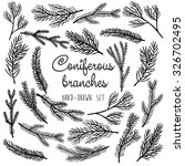 Vector Pine Tree Branches Set...