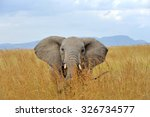 Stock photo elephant in national park of kenya africa 326734577