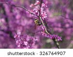 Bumble Bee Pollinates The...