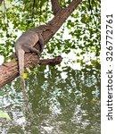 thai monitor lizard lay over... | Shutterstock . vector #326772761