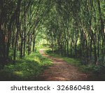 enchanting forest lane in a... | Shutterstock . vector #326860481