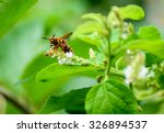 wasp on grass  bug in the park | Shutterstock . vector #326894537