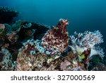 Постер, плакат: A reef octopus Octopus