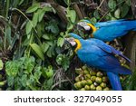 brazilian caninde macaw eating... | Shutterstock . vector #327049055
