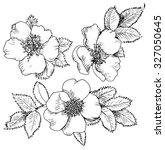 Dog Rose Hand Drawn Flowers