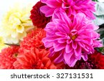 Chrysanthemum Isolated On Whit...