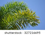 Green Areca Catechu Palm Leave...