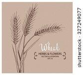 wheat  hand drawn vector... | Shutterstock .eps vector #327249077