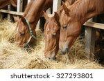 Purebred Horses Eating Fresh...
