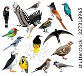 Birds Set Colorful Birds Low...