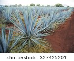 agave tequila landscape to...   Shutterstock . vector #327425201