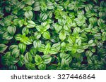 Vintage Style Green Fresh. Rain ...