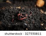 californian red worm on top of... | Shutterstock . vector #327550811