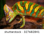 This Chameleon Is Hunting In...