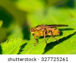 the fly | Shutterstock . vector #327725261