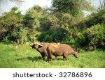 african buffalos  samburu game... | Shutterstock . vector #32786896