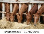 Thoroughbred Horses In The...