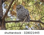 Strix Uralensis. Ural Owl