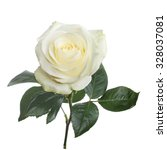 Single Beautiful White Rose...