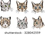 Color Portraits Of Cats  Cat ...