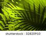 Tropical Forest. Sun Shining T...