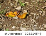 Four Footed Butterfly