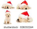 Stock photo set of retriever puppies in a santa claus hat isolated on white 328232264