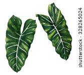 tropical split leaves plant... | Shutterstock . vector #328265024