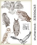 Hand Drawn Owl Vector Set