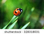 Macro Of Ladybug On A Blade Of...
