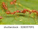 Ants  Red Ants.