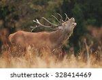 red deer  cervus elaphus | Shutterstock . vector #328414469