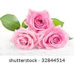Three Beautiful Pink Roses On...