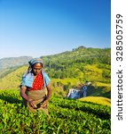 Small photo of Agriculture Agriculturist Harvest Tea Crop Concept